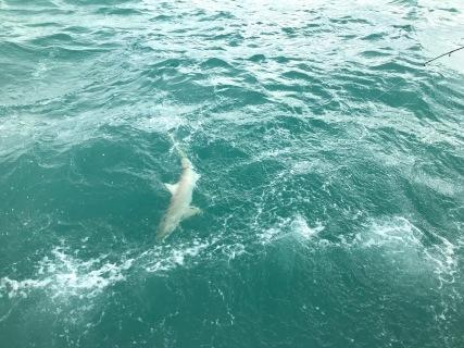 Baby Shark Defying Aly's Efforts.